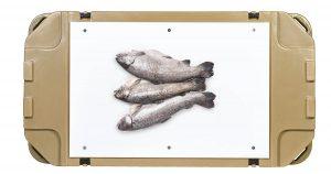 Cooler Cutting Board