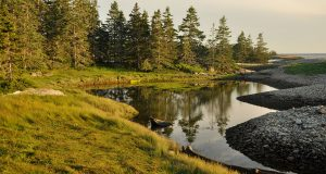 Coastal forest pool in Acadia National Park