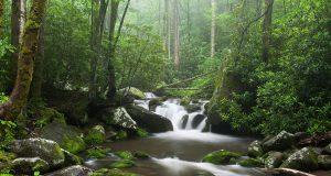 Stream waterfall through Great Smokey Mountains National Park
